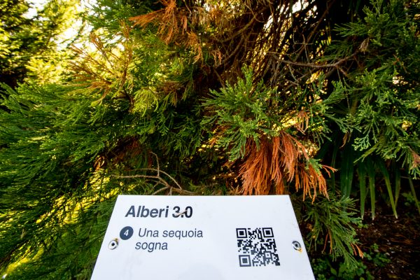 Ph. Alvise Crovato Alberi 3 (31)