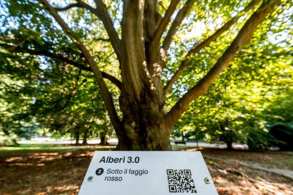 Ph. Alvise Crovato Alberi 3 (14)