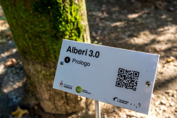 Ph. Alvise Crovato Alberi 3 (2)