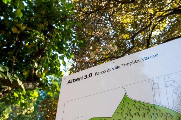 Ph. Alvise Crovato Alberi 3 (3)